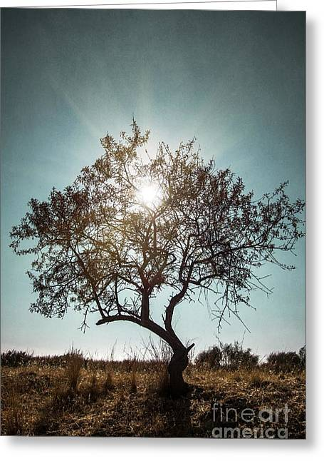 Moody Greeting Cards - Single Tree Greeting Card by Carlos Caetano