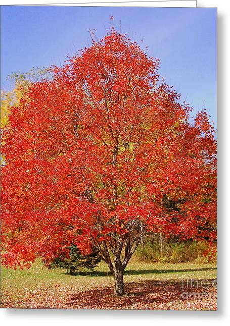Eunice Miller Greeting Cards - Single Tree Greeting Card by Eunice Miller