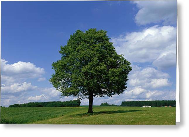 Field. Cloud Greeting Cards - Single Tree, Germany Greeting Card by Panoramic Images