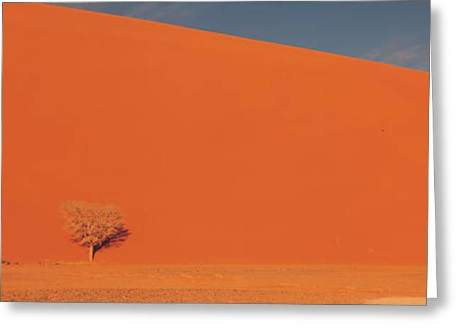 Arid Country Greeting Cards - Single Tree In Desert Namibia Greeting Card by Panoramic Images