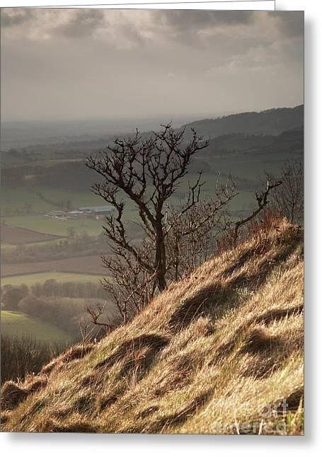 Sutton Farm Greeting Cards - Single tree Sutton Bank Greeting Card by Deborah Benbrook
