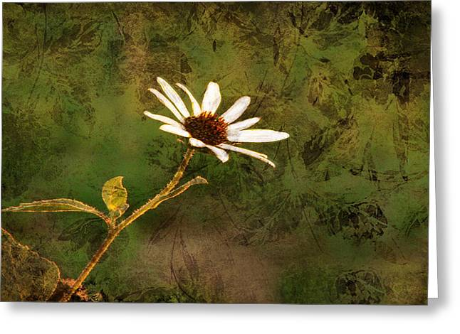 Print On Canvas Greeting Cards - Single White Daisy  Greeting Card by Beverly Guilliams