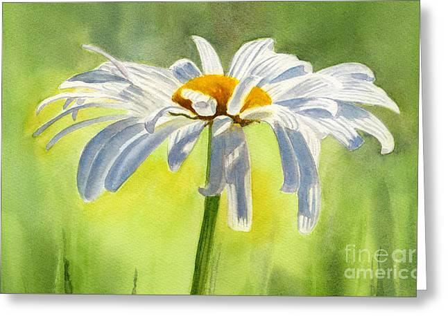 Daisy Greeting Cards - Single White Daisy Blossom Greeting Card by Sharon Freeman