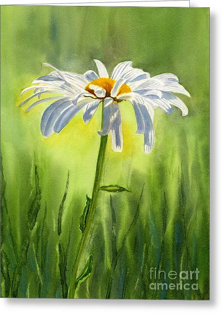 Single Greeting Cards - Single White Daisy  Greeting Card by Sharon Freeman