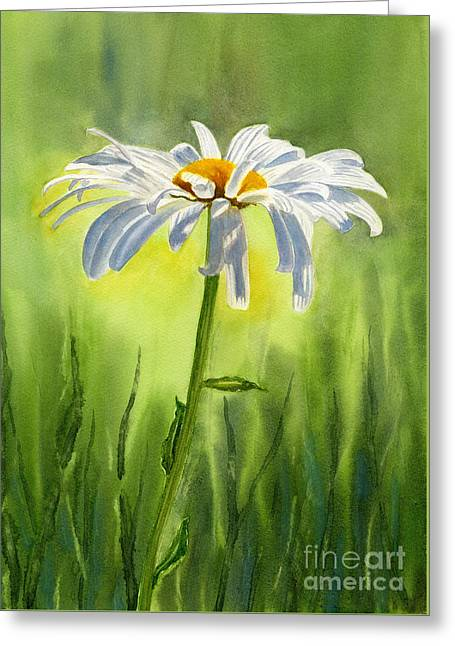 Single White Daisy  Greeting Card by Sharon Freeman