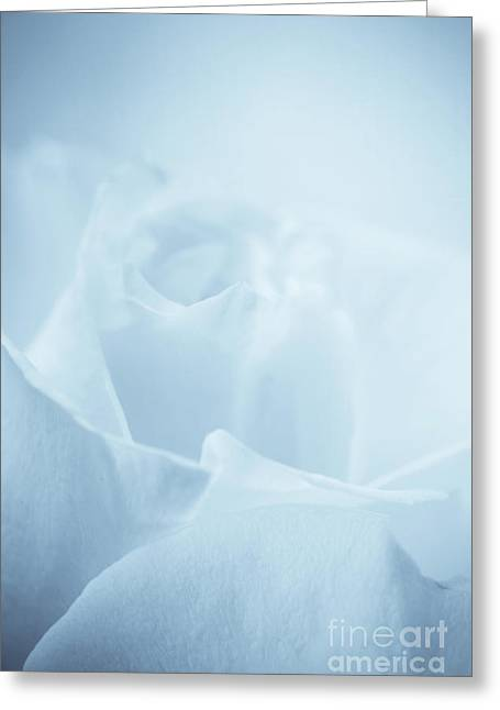 Linda Matlow Greeting Cards - Single white rose blue tint Greeting Card by Linda Matlow