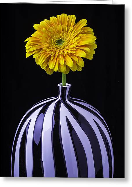 Single Photographs Greeting Cards - Single Yellow Daisy Greeting Card by Garry Gay