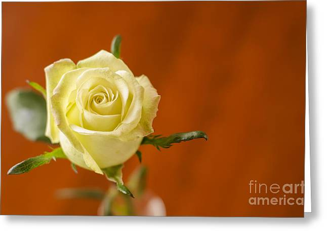 Single Pyrography Greeting Cards - Single yellow rose Greeting Card by Yoshiko Wootten