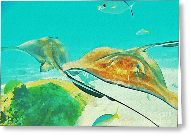 Jsm Fine Arts Greeting Cards - Singray City Cayman Islands Two Greeting Card by John Malone