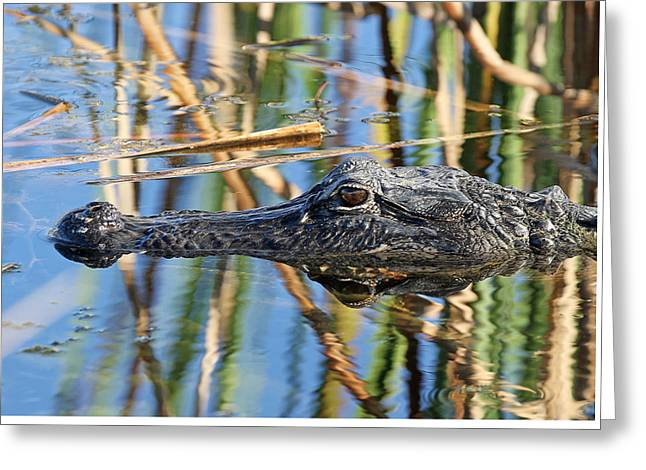 American Alligator Greeting Cards - Sinister Greeting Card by Juergen Roth