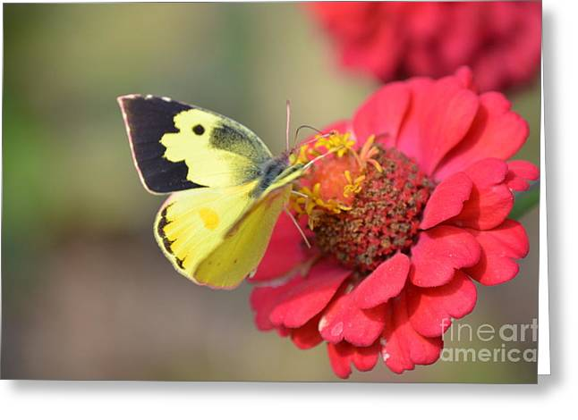 November Framed Prints Greeting Cards - Sip Of Yellow Greeting Card by Kathy Gibbons