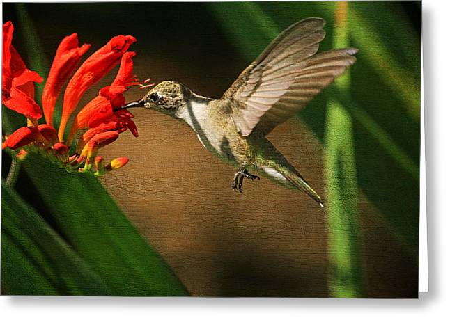 Crocosmia Greeting Cards - Sip-Sip-Hooray Greeting Card by Donna Kennedy
