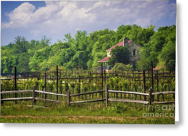Grapevine Photographs Greeting Cards - Sister Creek Vineyards Greeting Card by Priscilla Burgers
