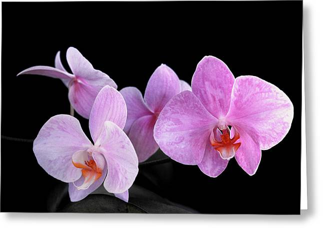 Orchis Greeting Cards - Sisters Greeting Card by Bill Morgenstern
