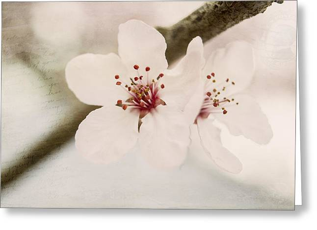 Plum Blossoms Greeting Cards - Sisters Greeting Card by Caitlyn  Grasso
