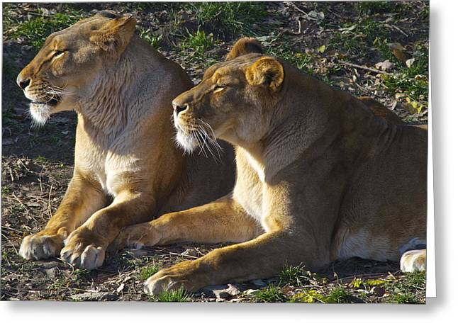 Big Sister Greeting Cards - Sisters Greeting Card by Frozen in Time Fine Art Photography