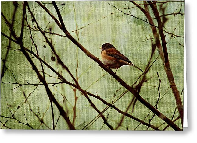 Texture Greeting Cards - Sittin In A Tree Greeting Card by Rebecca Cozart