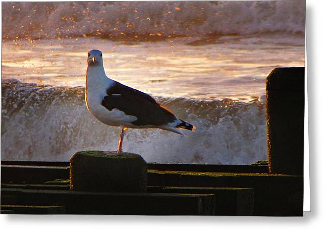 Sittin On The Dock Of The Bay Greeting Card by David Dehner
