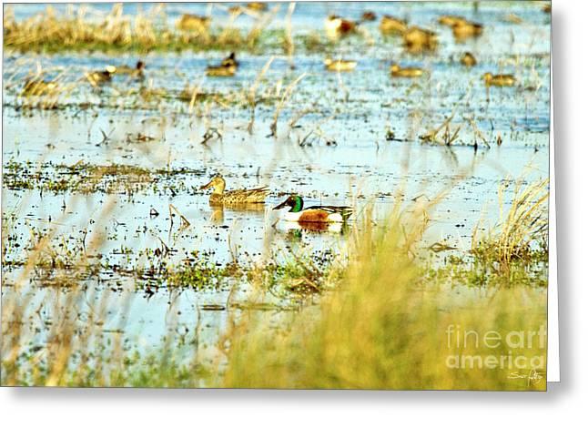 Sitting Ducks Greeting Card by Scott Pellegrin