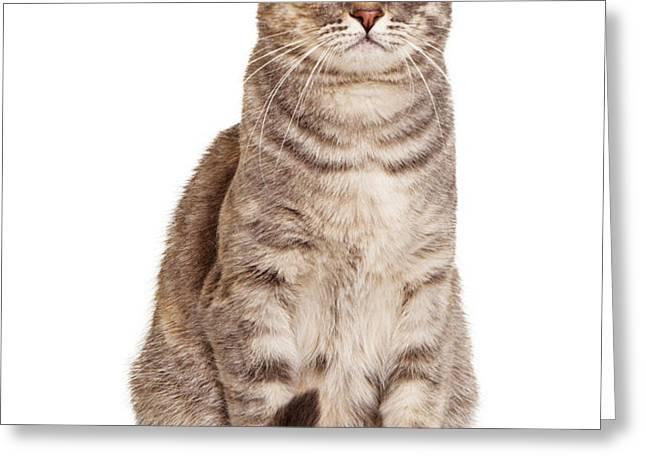 Sitting gray tabby cat Greeting Card by Susan  Schmitz