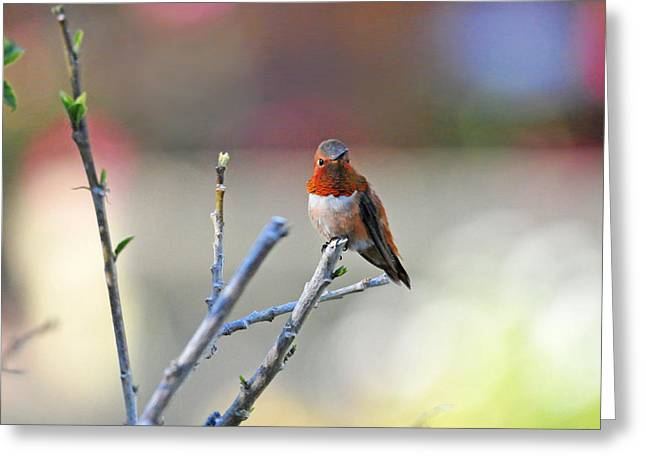 Migrating Hummingbird Greeting Cards - Sitting in a Crayon Garden Greeting Card by Lynn Bauer