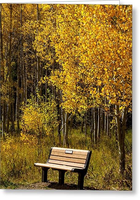 Scenic Drive Greeting Cards - Sitting in Color Greeting Card by Teri Virbickis