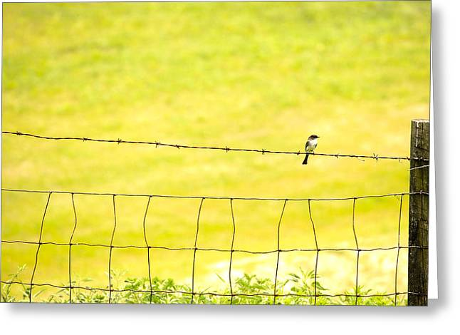 Sitting On A Wire Greeting Card by Karol Livote