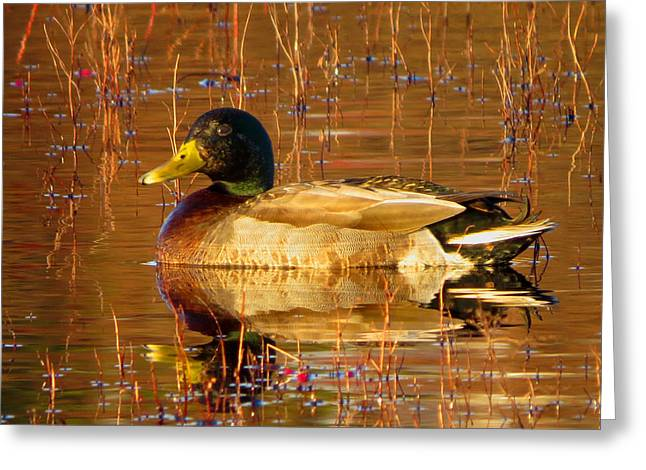 Dennis Ma Photographs Greeting Cards - Sitting Pretty Greeting Card by Dianne Cowen
