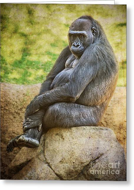 King Kong Greeting Cards - Sitting Pretty Greeting Card by Jamie Pham