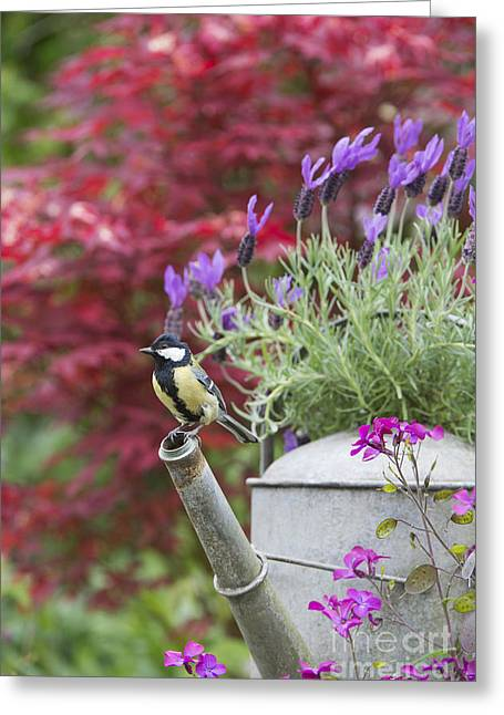 Passerine Greeting Cards - Sitting Pretty Greeting Card by Tim Gainey