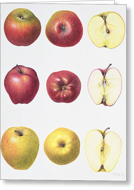 Six Apples Greeting Card by Margaret Ann Eden