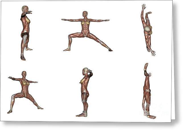 Physical Body Digital Greeting Cards - Six Different Views Of Warrior Yoga Greeting Card by Elena Duvernay