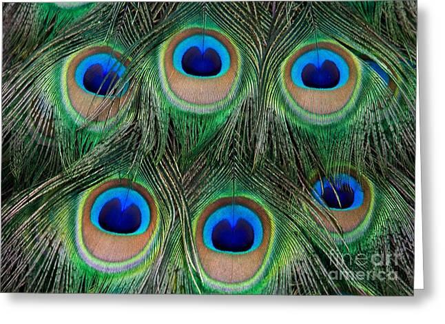 Irridescent Greeting Cards - Six Eyes Greeting Card by Sabrina L Ryan
