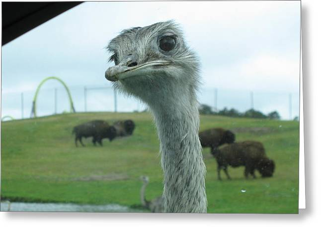 Jackson Photographs Greeting Cards - Six Flags Great Adventure - Animal Park - 121210 Greeting Card by DC Photographer