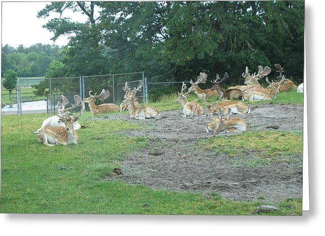Sixflags Greeting Cards - Six Flags Great Adventure - Animal Park - 121217 Greeting Card by DC Photographer