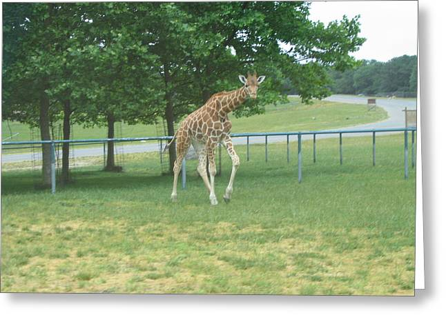 New Greeting Cards - Six Flags Great Adventure - Animal Park - 121243 Greeting Card by DC Photographer