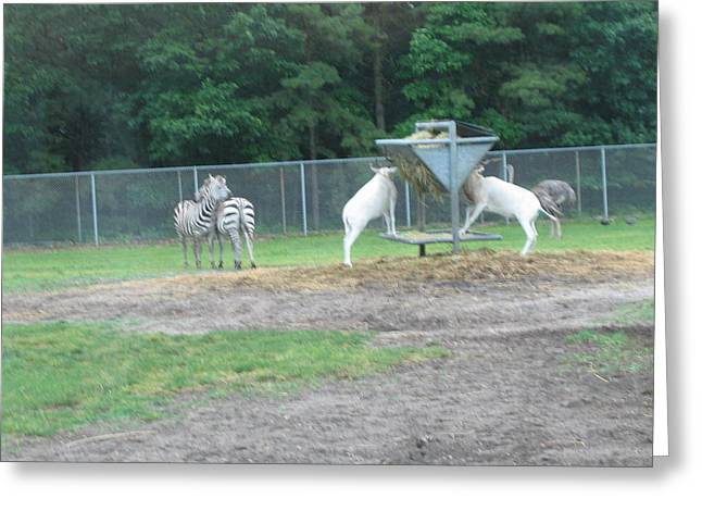 Sixflags Greeting Cards - Six Flags Great Adventure - Animal Park - 121247 Greeting Card by DC Photographer