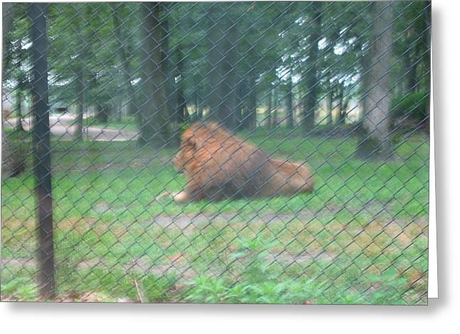 Adventure Greeting Cards - Six Flags Great Adventure - Animal Park - 121252 Greeting Card by DC Photographer