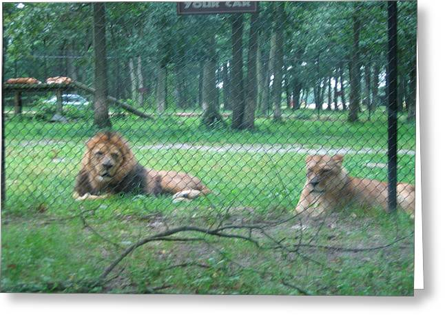 Six Flags Great Adventure - Animal Park - 121253 Greeting Card by DC Photographer