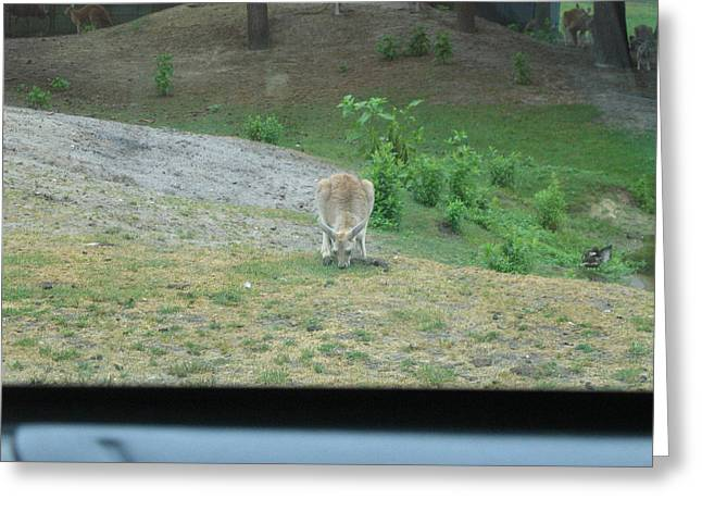 Six Flags Great Adventure - Animal Park - 121272 Greeting Card by DC Photographer