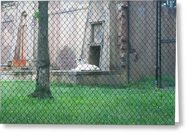 Jackson Greeting Cards - Six Flags Great Adventure - Animal Park - 121275 Greeting Card by DC Photographer