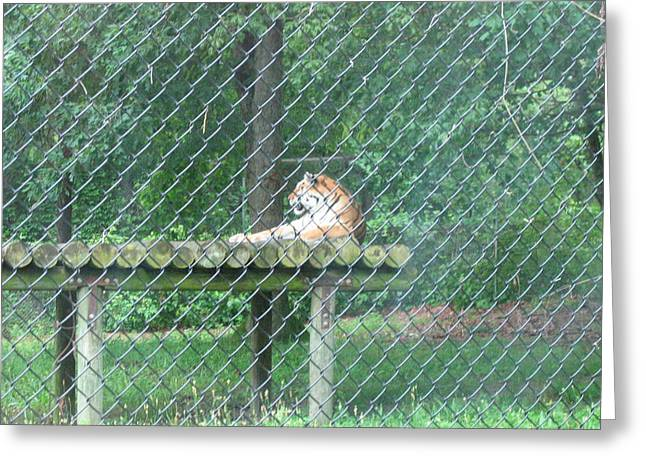 Great Greeting Cards - Six Flags Great Adventure - Animal Park - 121277 Greeting Card by DC Photographer