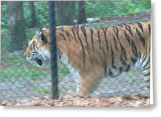 Great Photographs Greeting Cards - Six Flags Great Adventure - Animal Park - 121278 Greeting Card by DC Photographer