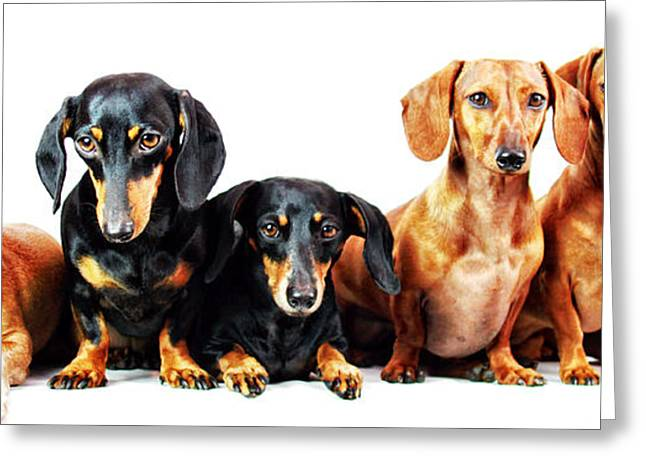 Hounddog Greeting Cards - Six pack  Greeting Card by Johnny Ortez-Tibbels