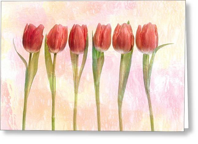 Green Leafs Greeting Cards - Six Pink Tulips With Green Stems Greeting Card by Panoramic Images
