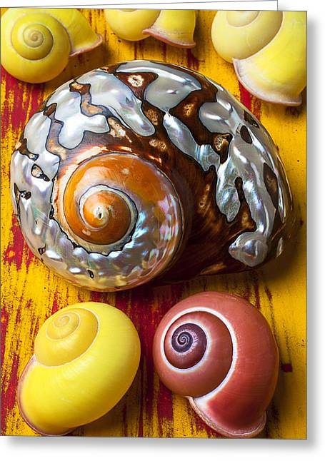 Six Greeting Cards - Six snails shells Greeting Card by Garry Gay