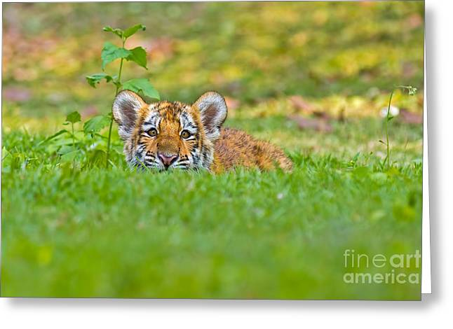 Sizing Up The Situation Greeting Card by Ashley Vincent