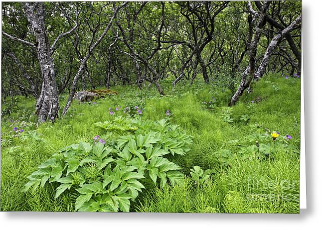 Plantlife Greeting Cards - Skaftafell National Park in Iceland Greeting Card by Robert Preston