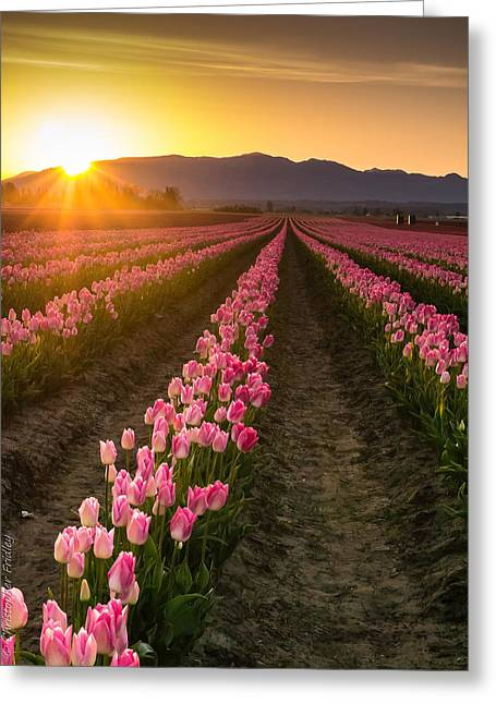 Christopher Fridley Greeting Cards - Skagit Sunrise Greeting Card by Christopher Fridley