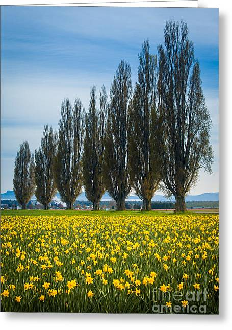 Spring Bulbs Greeting Cards - Skagit Trees Greeting Card by Inge Johnsson